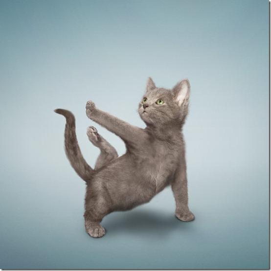 yogacats0
