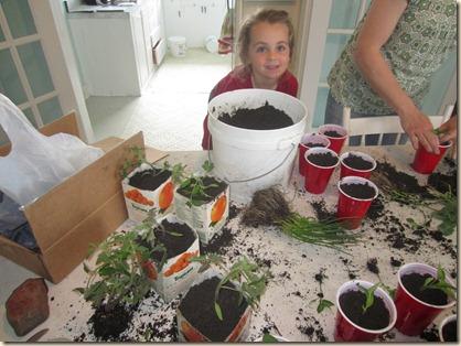 potting plants 059