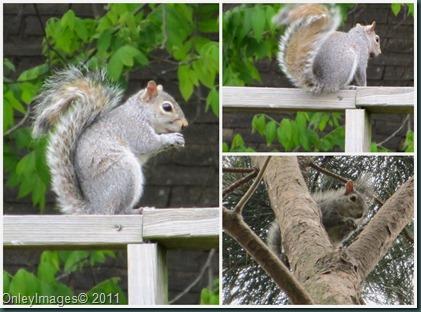 squirrel collage0611