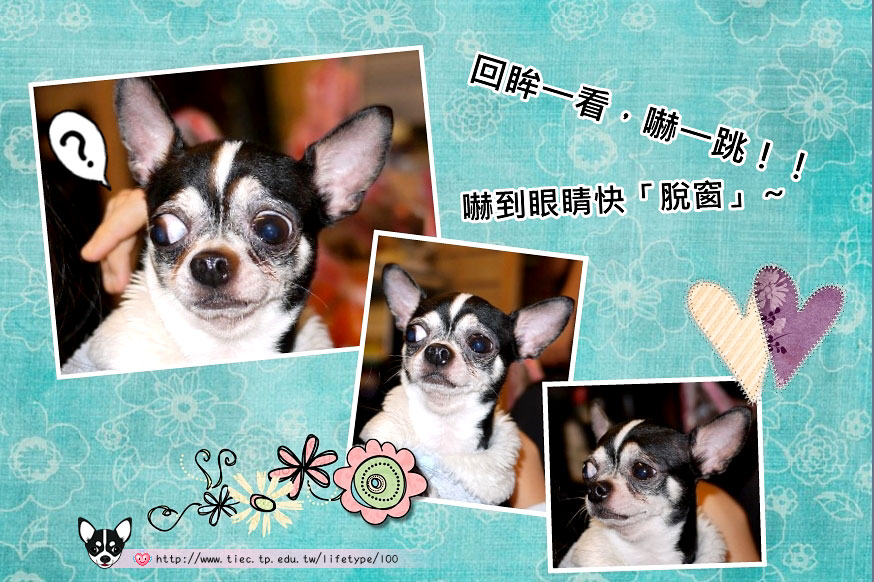 201007minibook-dog07.jpg