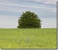 4929523-lonely-albero-al-centro-del-campo-di-erba-verde-selettiva-concentrarsi-su-albero