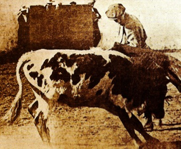 Tentadero Jose Domecq (primavera 1914) 002
