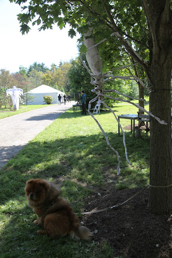 Yes, I'll follow the director's orders and sit here tied to this tree for now, even though I spent ALL morning getting my fur to look just so!