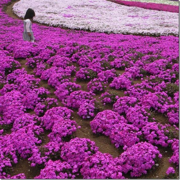 pink-park-japan-4