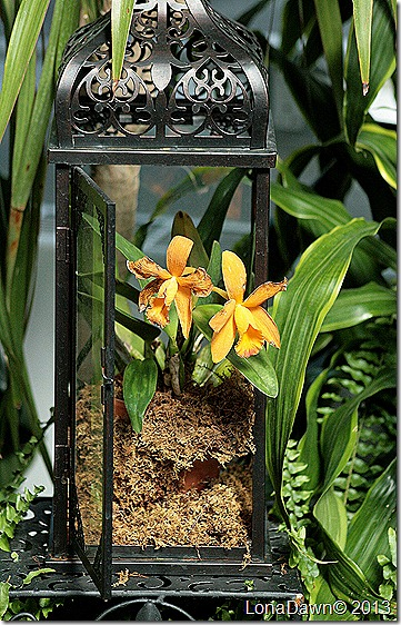 FPC_Orchid_Display