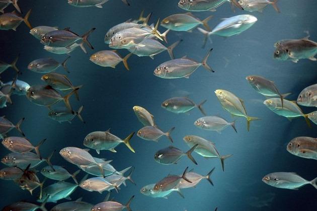 georgia-aquarium-6