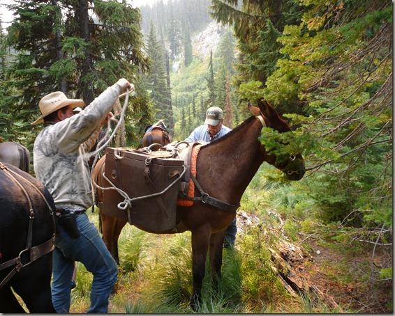 Horse trip 173