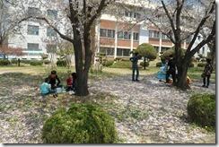 Cherry Blossom Festival Korea 018