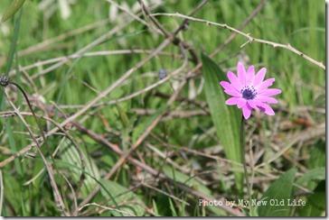 La Selva i fiori 14