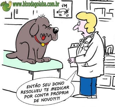 Os riscos da automedicação na Medicina Veterinária
