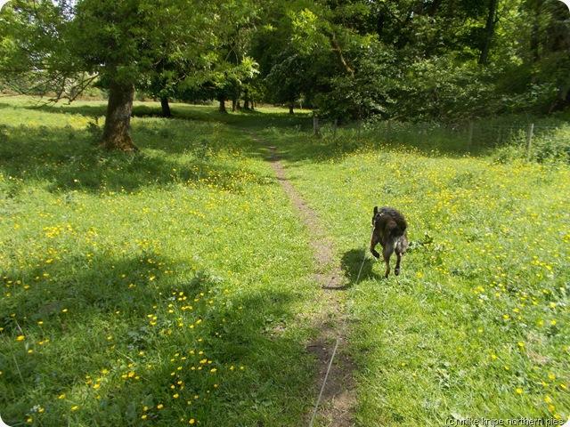 dog path dog path path dog