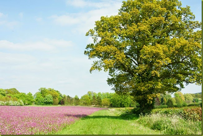 perfect pink meadow