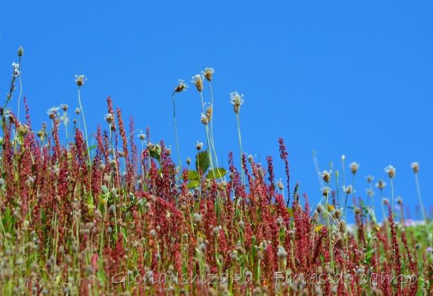 Glória Ishizaka -flor  19