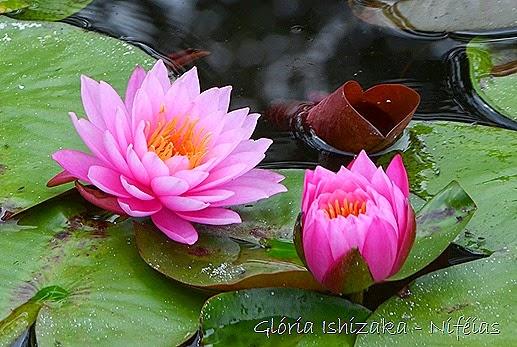 Glória Ishizaka - flores 93