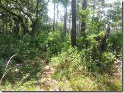 Orange blazes for Florida Trail