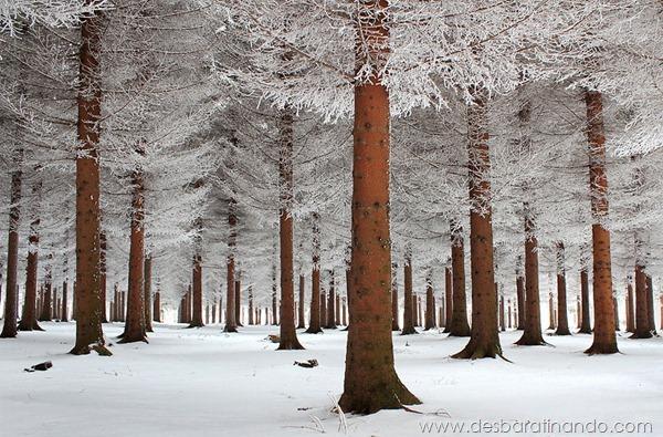 paisagens-de-inverno-winter-landscapes-desbaratinando (7)