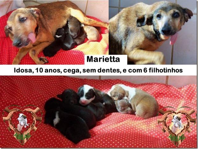 marietta_filhotes