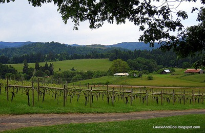 Vines in Elkton Area at Bradley Winery]