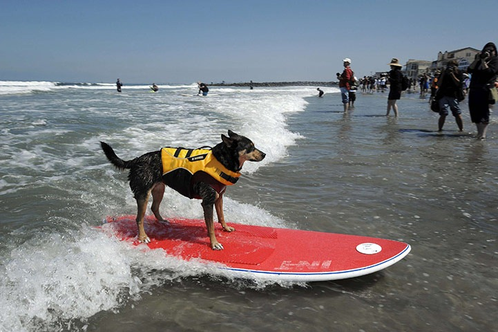 6th-surf-dog-comp1