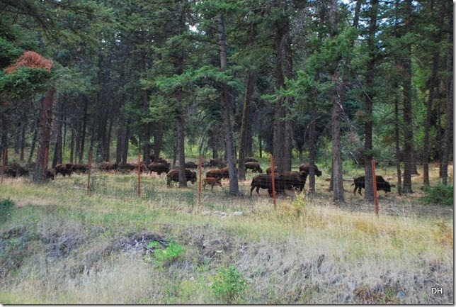 08-19-14 A National Bison Range (102)