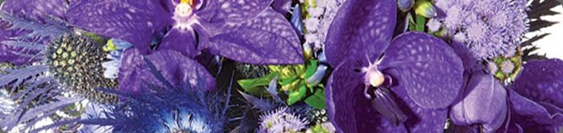 43elan flowerse