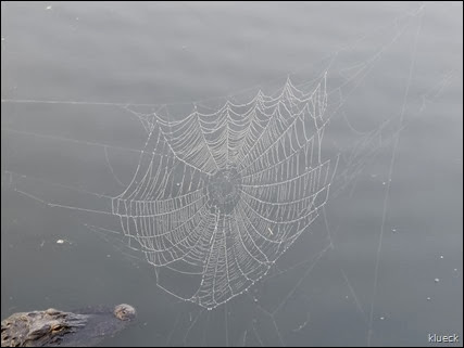 spider web and gator