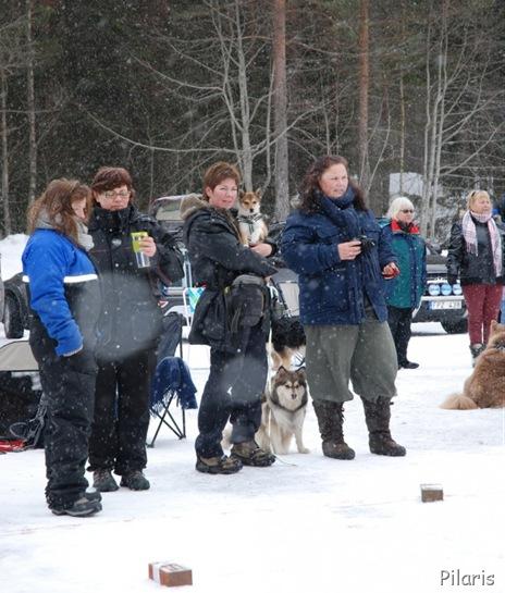 3-100313-090313-Lapphundspesialen-i-Kongsberg-Nøve-Tassen-Marianne-og-Molly-685x1024