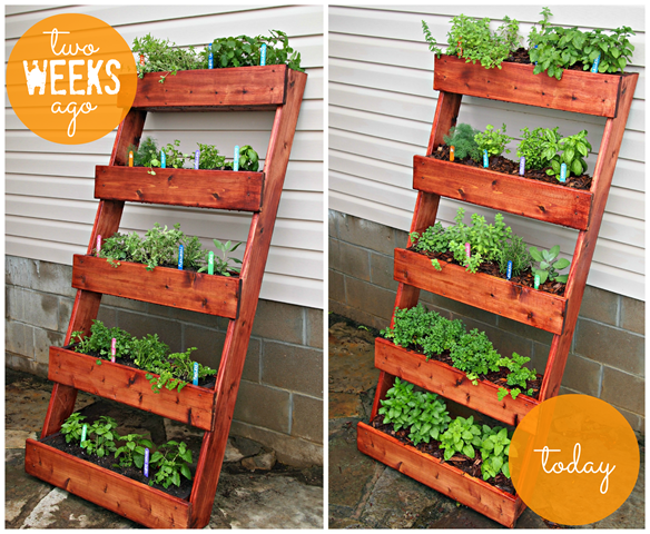 DIY Herb Garden #digin