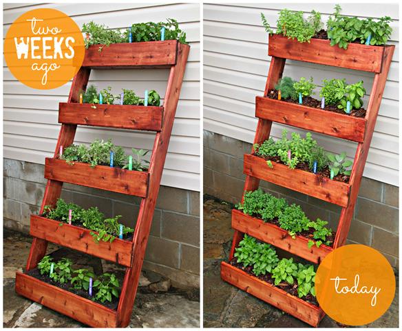 DIY Herb Garden #digin
