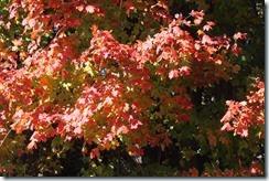 2014-10-26 Oct 26 009
