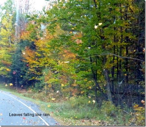 Leaves falling like rain