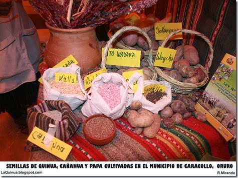 Semillas de Quinua, Cañahua y Papa del Municipio de Caracollo, Oruro-Laquinua.blogspot.com_Rubén Miranda