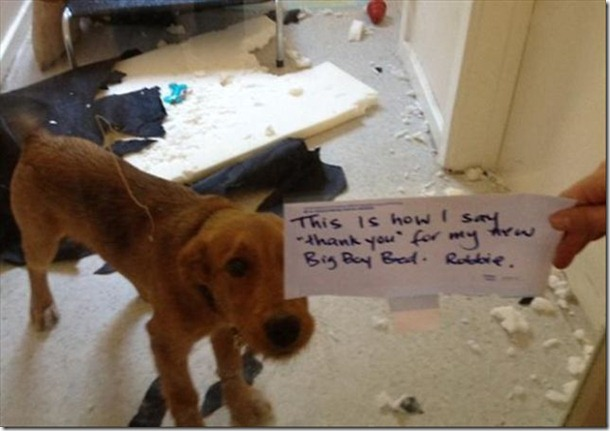 dog-shaming-bad-15