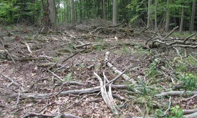 7 - Wald