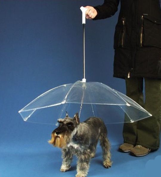 dogbrella