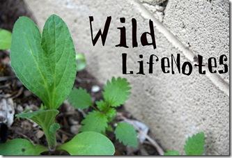 wildlifenotes