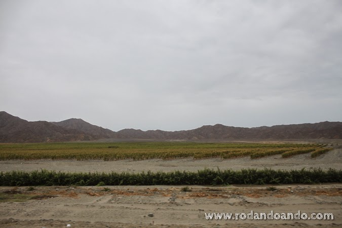 plantaciones en la arena