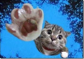 fotos animales divertidas patatitasylimones (8)