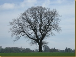 IMG_0029 Tree