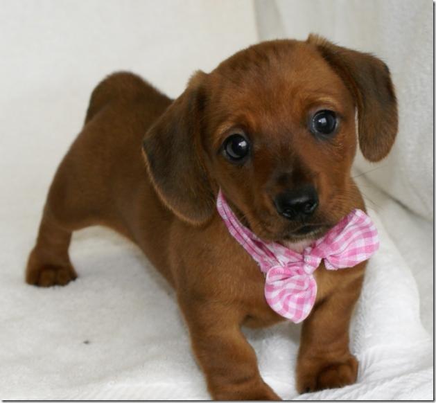 fotos de perritos imagenesifotos.blogspot (16)