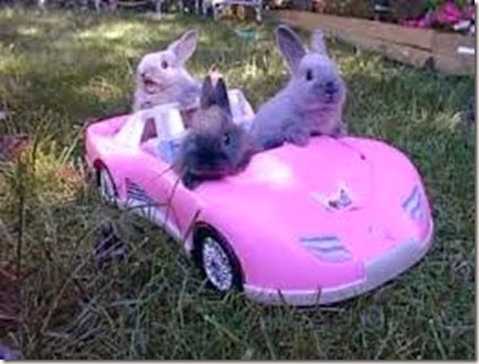 23294d1206244146-why-did-easter-bunny-cross-road-bunnies_driving_400x300