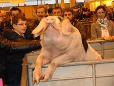 2015.02.26-034 Hortensia porc de Bayeux
