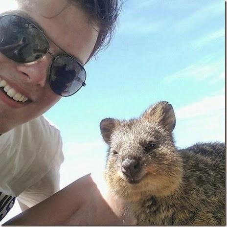 selfies-australian-quokka-024