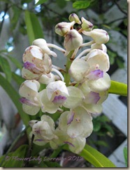 09-11-tiny-orchids