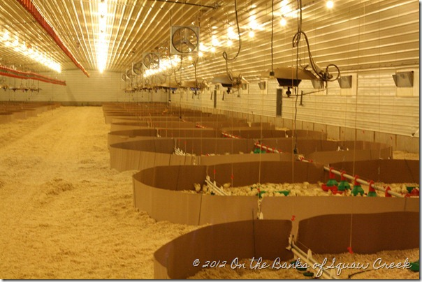 inside of turkey barn