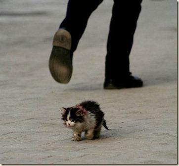 hobo-cat
