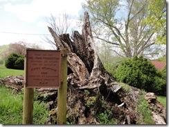 4-24 10C Pemberton Oak