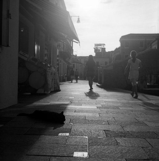 black cat, Burano/Venice, Rolleicord III, Kodak TriX 320