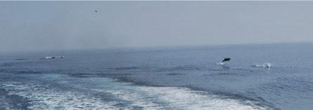 ApproachingAvalonHarbor-40-2014-01-29-13-49.jpg