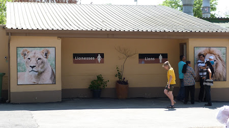 toaleta leilor
